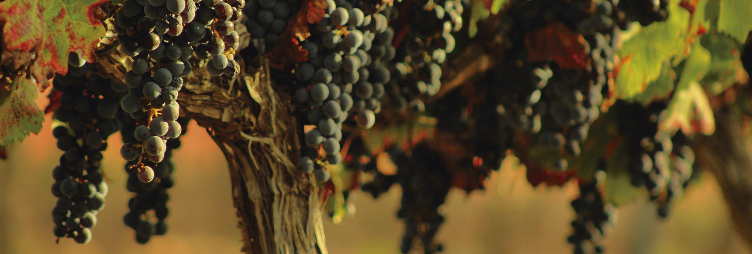 carta vins hostal gastronòmic la creu mora ebre restaurant-01